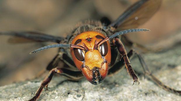Sie mögen klein sein, aber Spinnen und Wespen leisten Großes, wenn es um das...