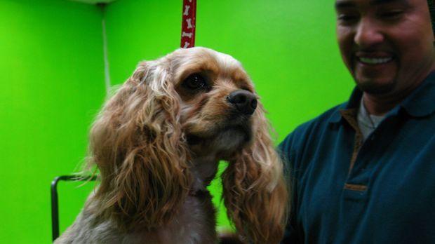 Hundeflüsterer Cesar Millan hilft heute Wes Murph, der einen schicken Hundesa...
