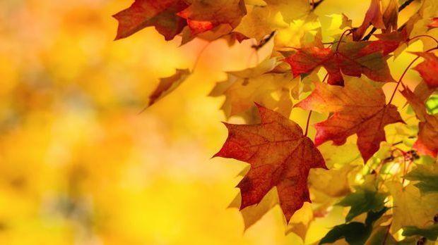Der Herbst lädt zum Basteln mit Laub ein – die hübschen Farben sind die perfe...
