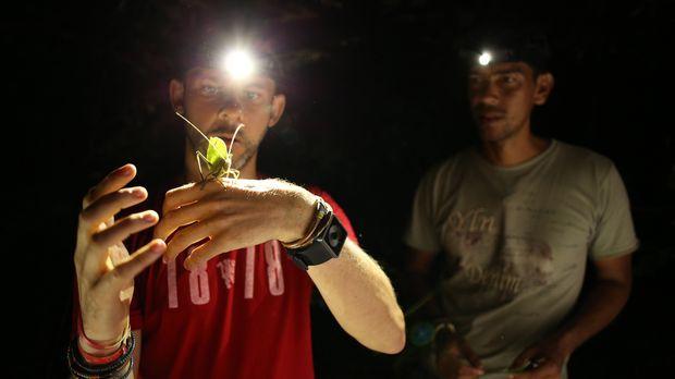 Im brasilianischen Dschungel entdecken Dominic Monaghan (l.) und sein Kollege...