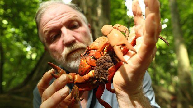 Swarms - Tiere in der Überzahl - Auf den Weihnachtsinseln erforscht George Mc...