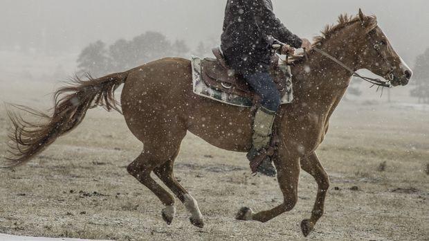 Marty erreicht sein Winter-Jagdrevier, aber das ungewöhnlich warme Wetter mac...