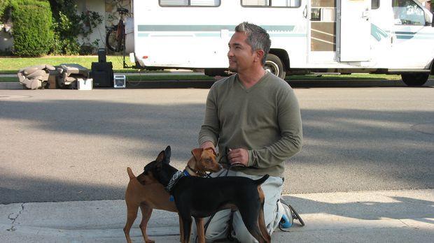 Cesar Millans psychologisches Hundecenter ist beides - ein Zuhause und ein Zu...