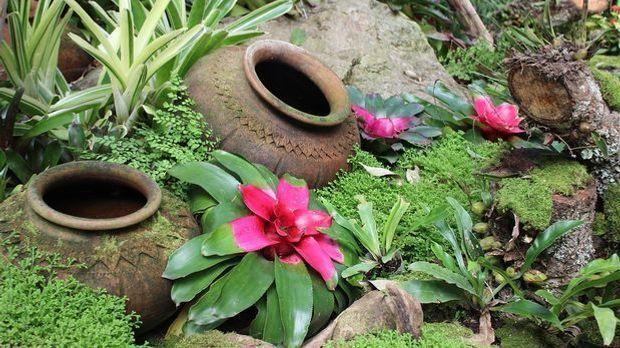 kleiner Garten