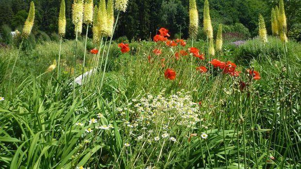Gräser Blumenwiese_Pixabay