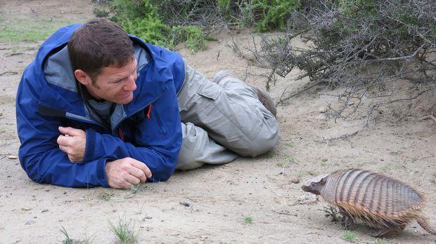 In Argentinien begegnet Steve Backshall dem großen Panzerschwein ... © Scott...