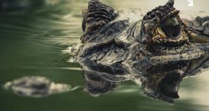 Wild Island - 24 Essbare Arten ... Du Bist Eine Davon