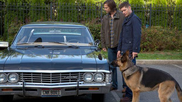 Wird es Sam (Jared Padalecki, l.) und Dean (Jensen Ackles, r.) gelingen, mit...