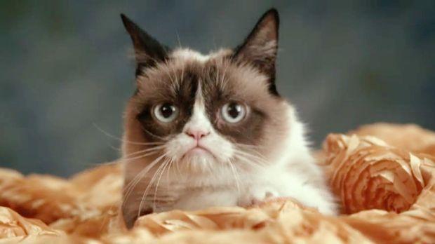 jetzt wird 39 s tierisch die witzige welt der katzen sat 1. Black Bedroom Furniture Sets. Home Design Ideas