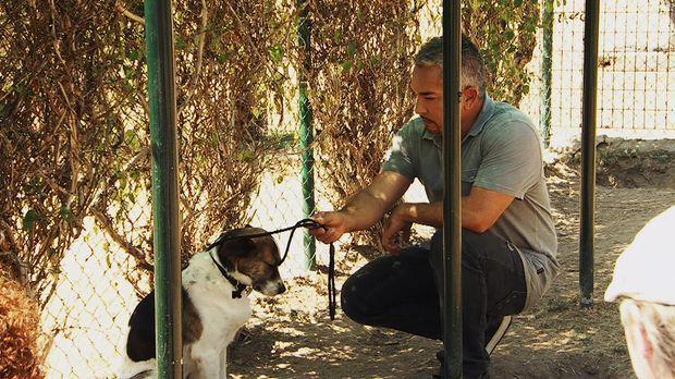 Der Mischlingshund Brigadiere ist erst seit kurzem im Tierheim. Er ist völlig...