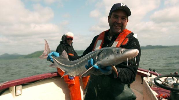 An der nordamerikanischen Pazifikküste macht sich Dr. Zeb Hogan auf die Suche...