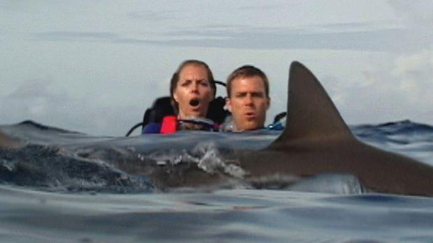 Unter Haien: Susan (Blanchard Ryan, l.) und Daniel (Daniel Travis, r.) ... ©...