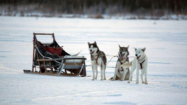 Die Menschen in Alaska bereiten sich auf einen harten Winter vor, der schon i...