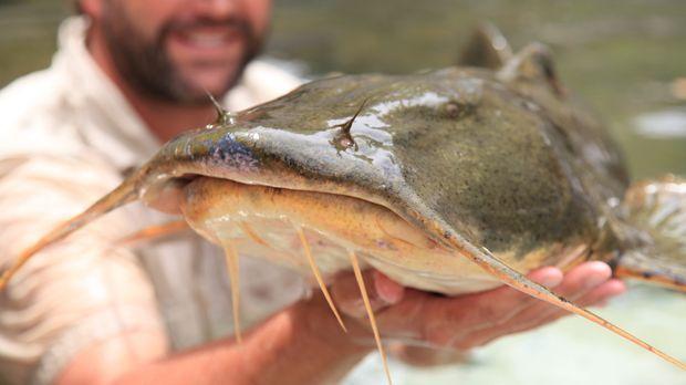 Möchte das Geheimnis der Monsterfische im Mekong ergründen und herausfinden,...