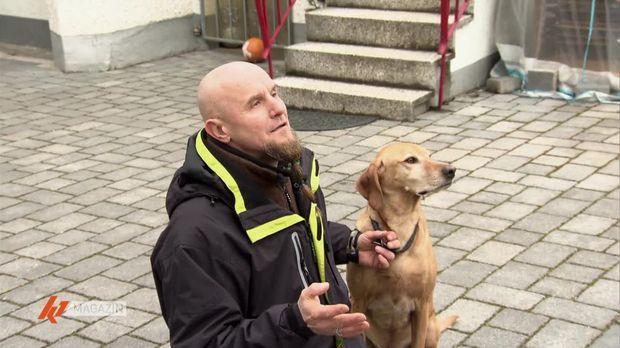 K1 Magazin - K1 Magazin - Stubenreinheit Und Gassi Gehen: Tipps Vom Hunde-erzieher
